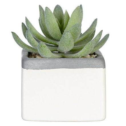 John Lewis Succulent in Small Square Pot, £6